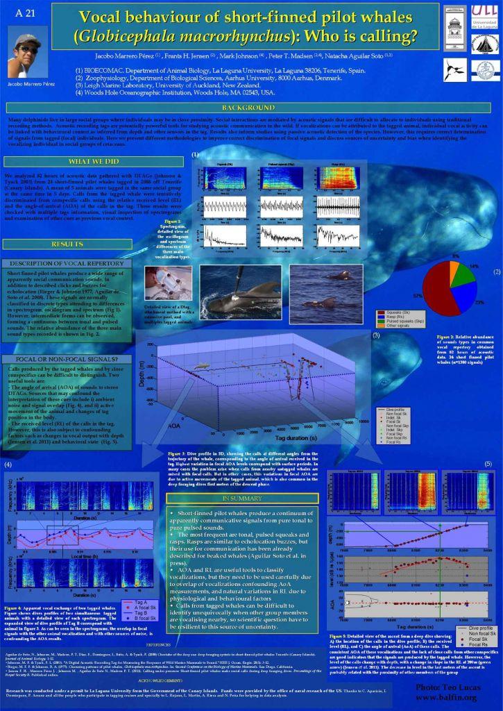 poster-calderon-pilot-whale