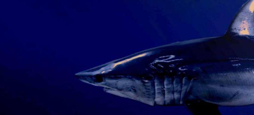 fondo especies tiburones