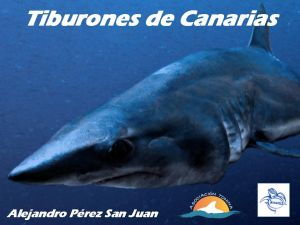 Tiburones de Canarias