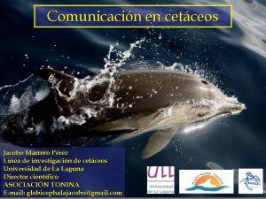 procesos de comunicacion en cetáceos_2