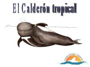 Calderón tropical_secundaria